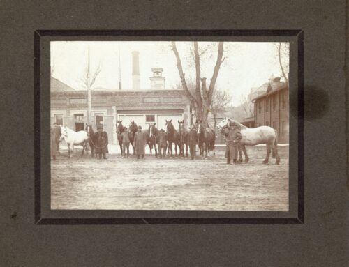 Photograph – Draft horses, Engine House #1, City Clerks
